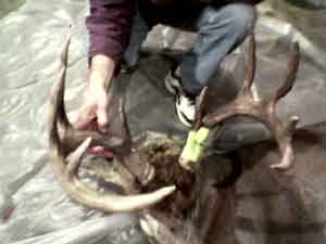 Jim Wold shows off this big buck that was shot by his brother, Steve Wold, in Pepin County